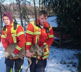02.03.18 : Feuerwehr Maschen rettet Reh von zugefrorenem See
